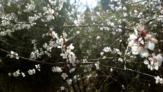 春暖花开午子山